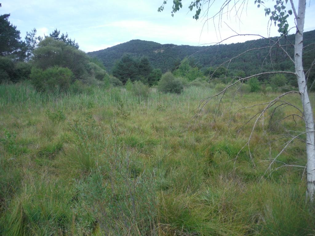 Zone humide du marais du Plan d'Anelle - La Martre