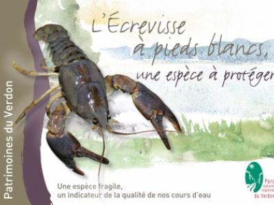 """livret """" écrevisses à pieds blancs, espèce à protéger"""" dans la collection Partimoines du Verdon"""